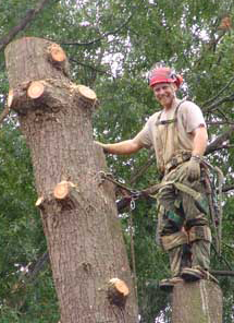 Halifax Dartmouth Tree Removal Services