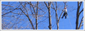 Dartmouth NS Tree Pruning Services Tree Services by ISA Certified Arborists