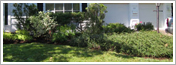 Dartmouth NS Tree & Property Management Plans Tree Services by ISA Certified Arborists