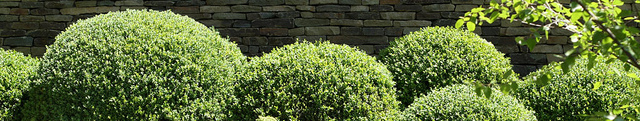Hedge Pruning Services in Halifax Nova Scotia