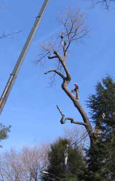 Halifax NS Tree Removal Services